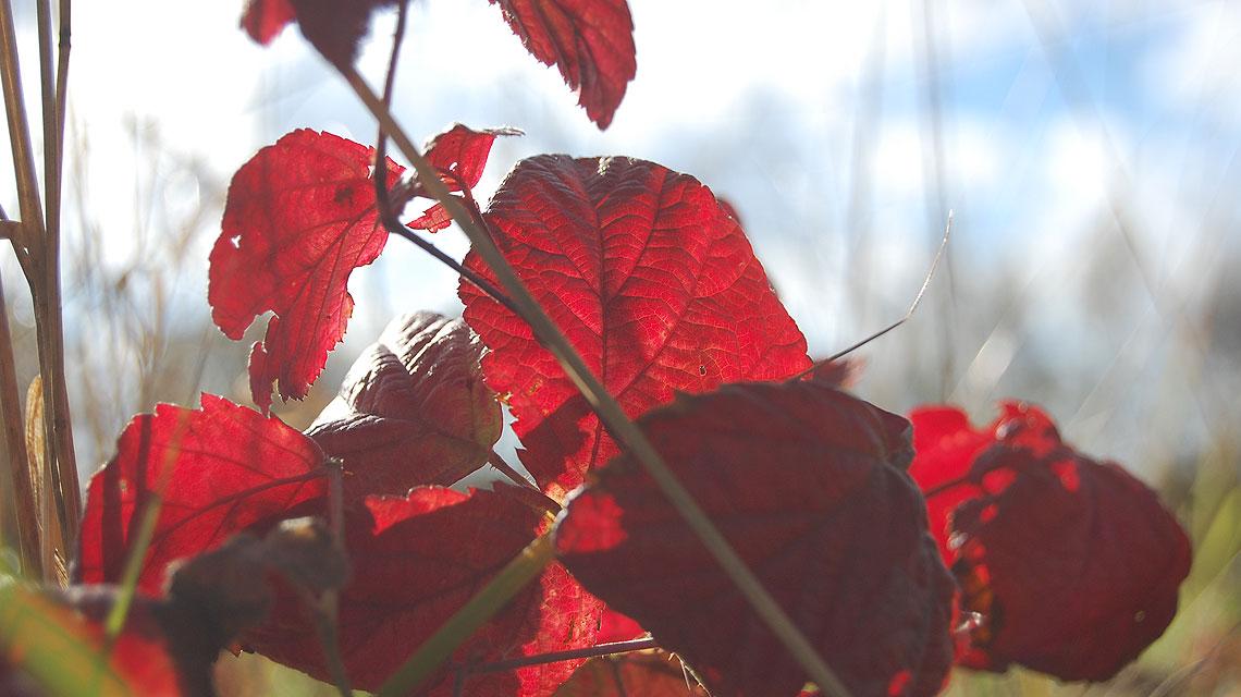 Herbst-Laub