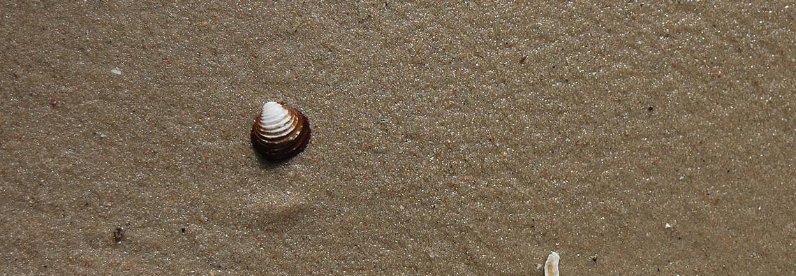 Muschel-Strand-Sand