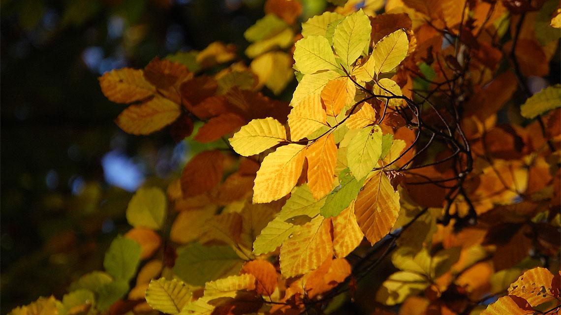 Herbst-Bäume-Blätter