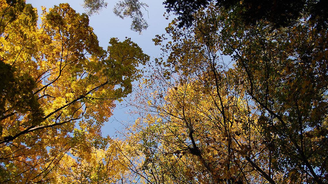 Herbst-Baumkronen
