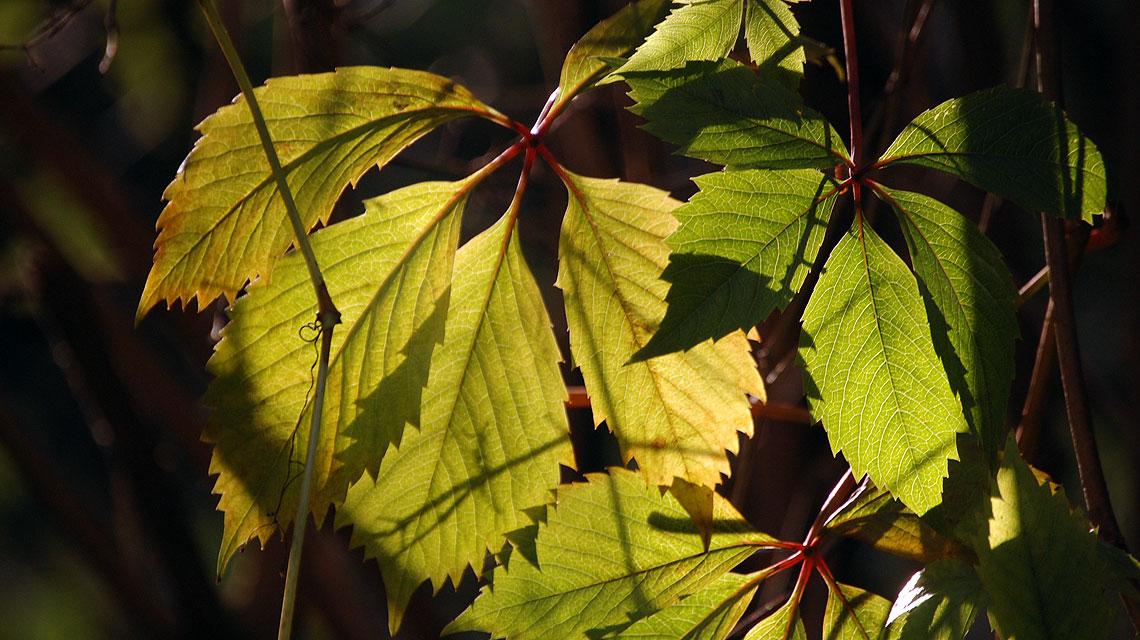 Herbst-Blätter-Sonne