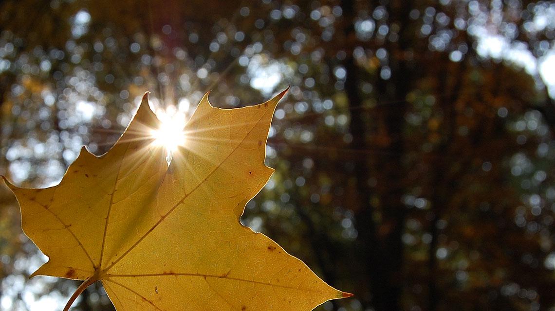 Herbst-Wald-Sonne