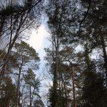Friedhof-Grunewald-Forst-Bäume